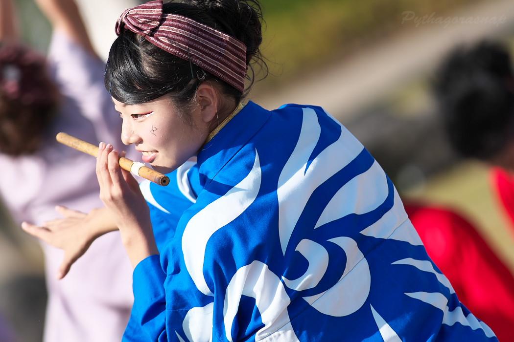 名古屋大学 快踊乱舞 @  第10回碧南よさこいやってみりん祭_c0187584_17481567.jpg