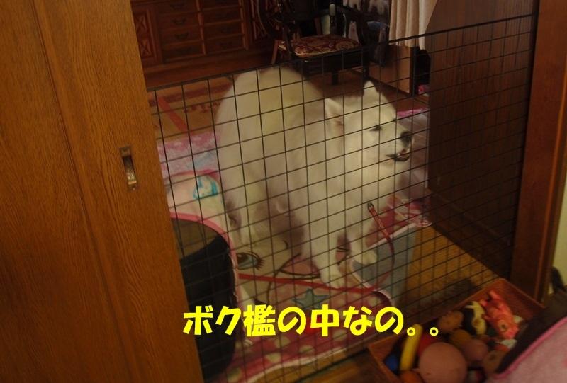 e0018604_20081518.jpg