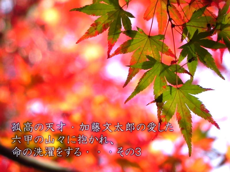 b0182613_22235398.jpg