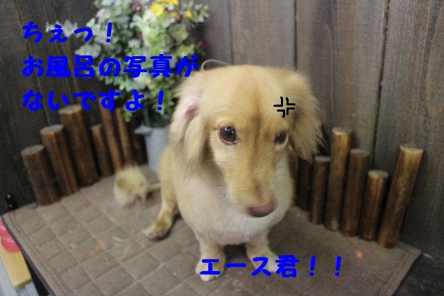 b0130018_0371418.jpg