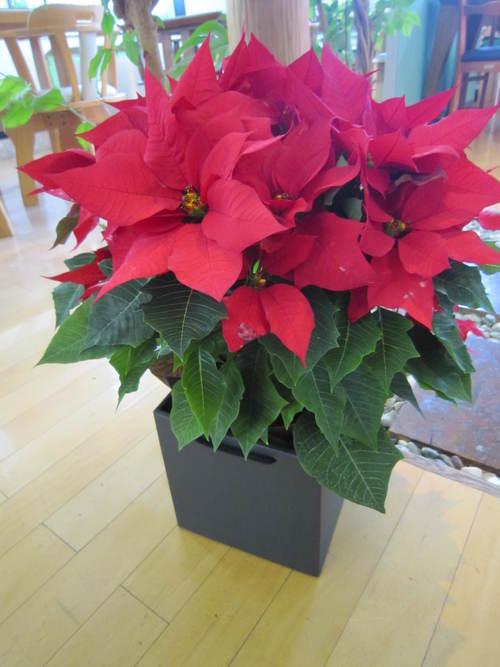 もうすぐクリスマス♪_f0129627_13195414.jpg