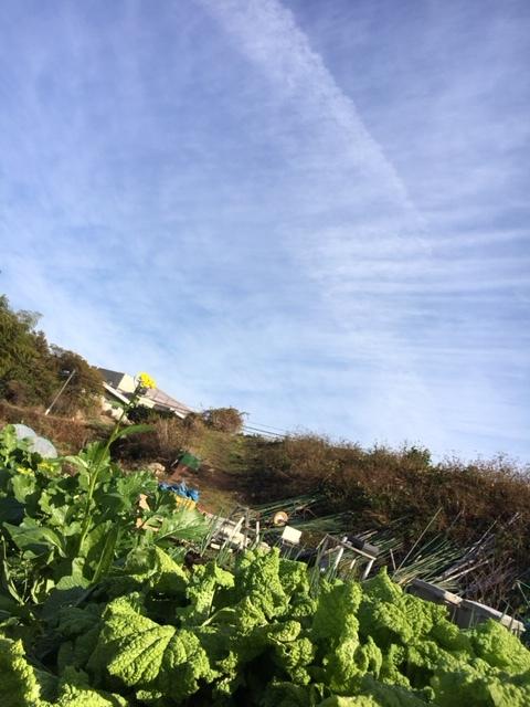 今朝は 昨晩の雨で玉葱に水遣りしなく大丈夫 ラッキーでした  丁度いい保水状態です_c0222448_12482411.jpg