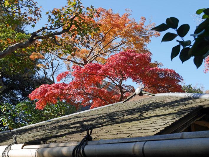 地元ジャーナリストと探る北鎌倉の紅葉12・3~4_c0014967_9424096.jpg