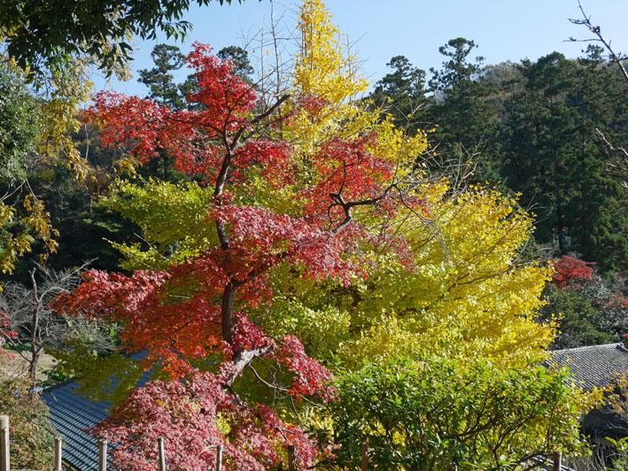 地元ジャーナリストと探る北鎌倉の紅葉12・3~4_c0014967_9425016.jpg