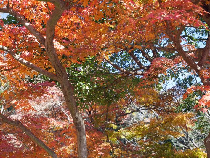 地元ジャーナリストと探る北鎌倉の紅葉12・3~4_c0014967_9425873.jpg