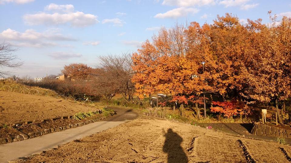 足立区都市農業公園に行ってきました《子連れお出かけおすすめスポット》_e0030586_11251457.jpg