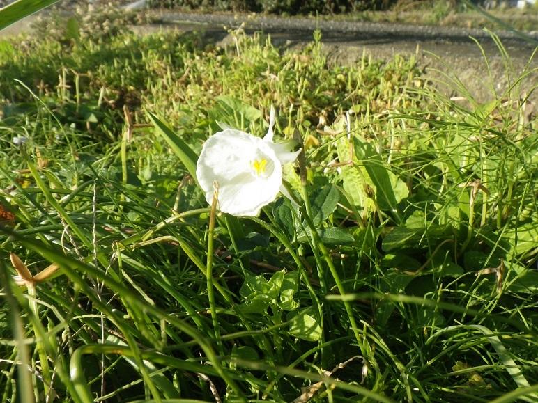 南の庭(畑)の西の端_d0119688_20322643.jpg