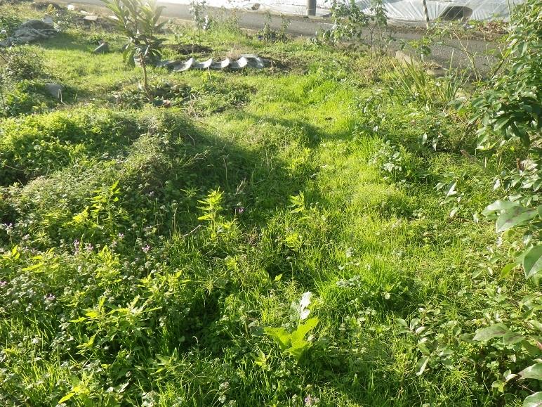 南の庭(畑)の西の端_d0119688_20330851.jpg