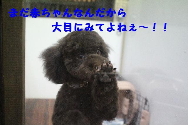 うれしい~!!_b0130018_7465460.jpg