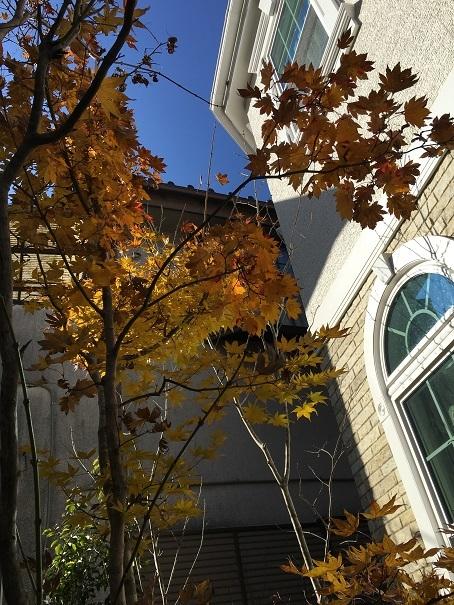 雑木の庭。晩秋の景色に。_e0356655_18082341.jpg