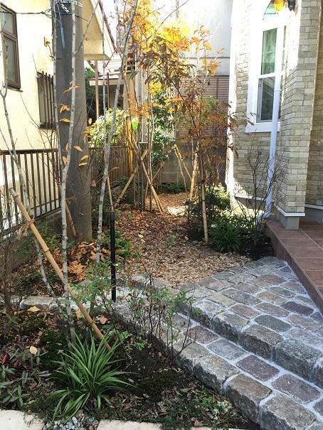 雑木の庭。晩秋の景色に。_e0356655_18084122.jpg