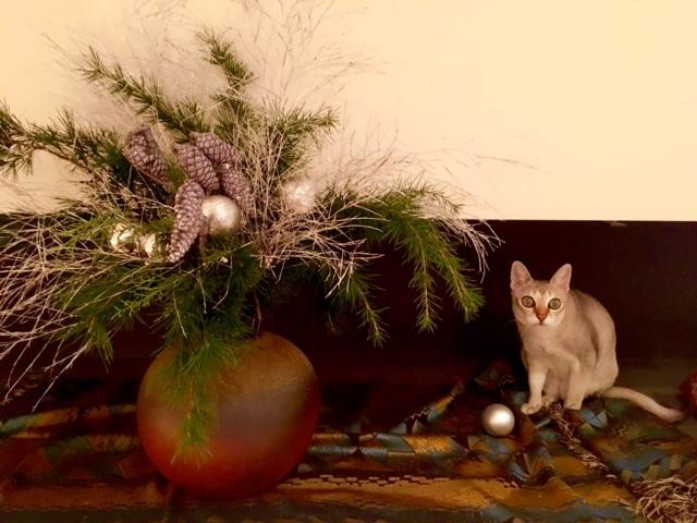 ディアモン君とクリスマスの準備_a0138976_15125786.jpg
