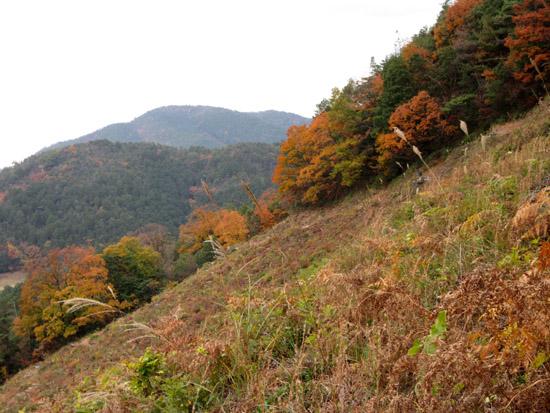 船山から京見峠・長谷川へ_e0048413_161732.jpg
