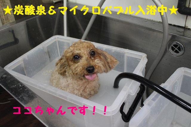 うれしい~!!_b0130018_8311180.jpg