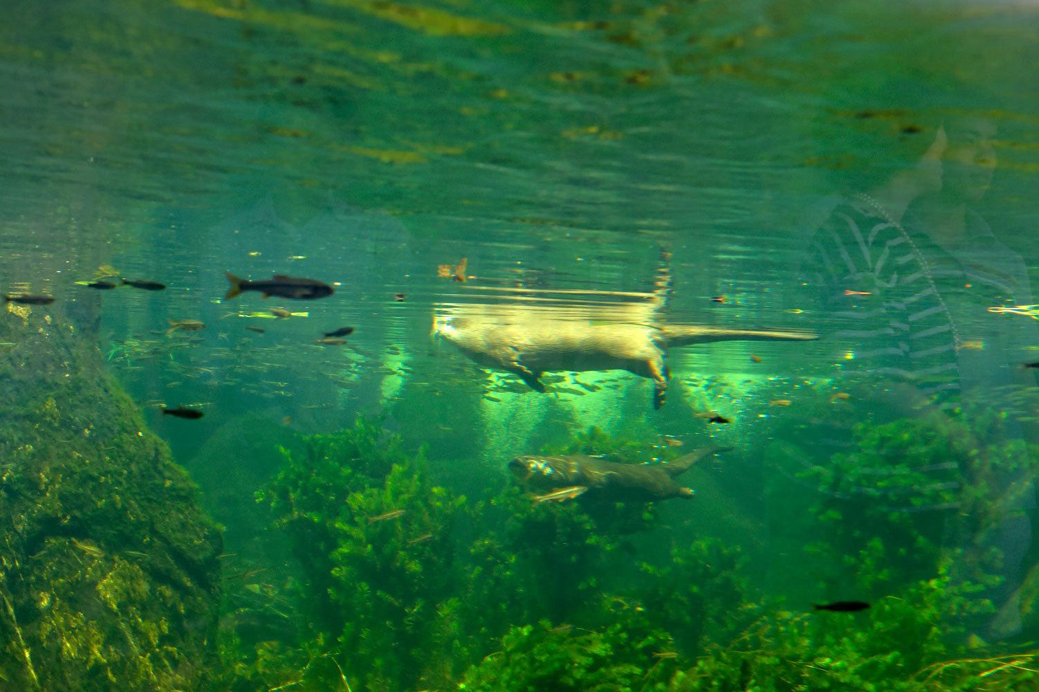 川の中のような水槽_b0023856_07105366.jpg