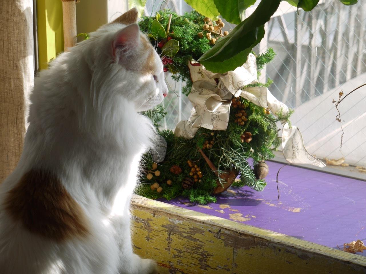 クリスマス・リースとオルウェンくん。_e0356356_18372203.jpg