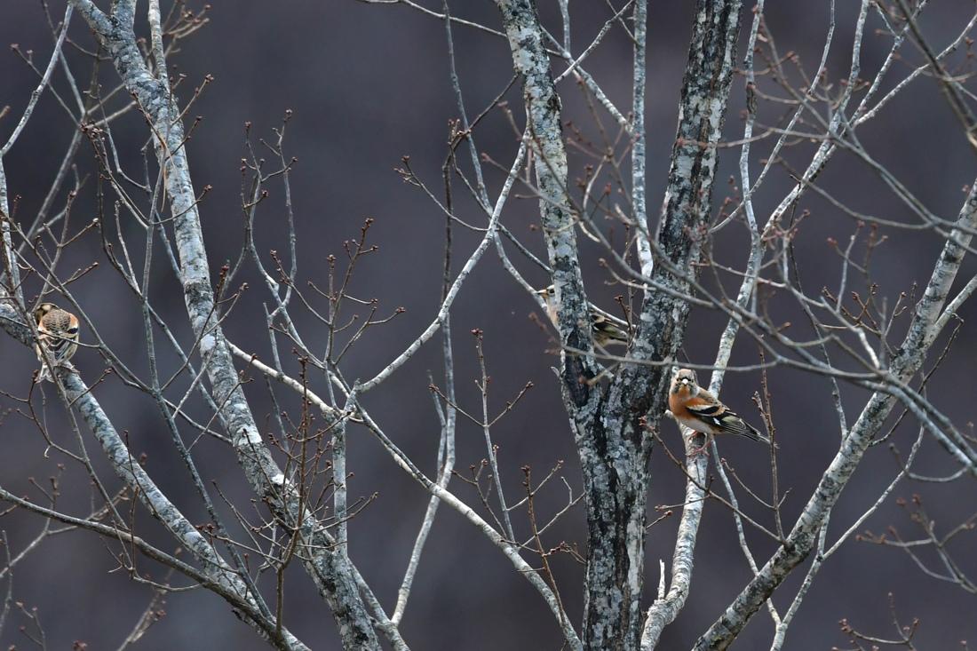 林道の鳥さん_f0053272_10003099.jpg