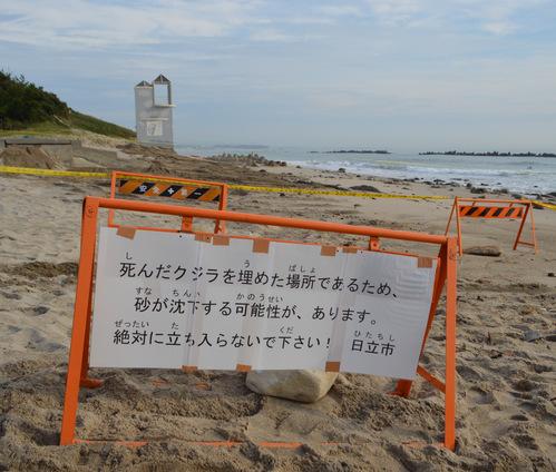 9/17 県北芸術祭へ。テアの鯨探訪と、海側へ。_a0216706_19371590.jpg