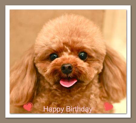 Happy Birthday♡メイちゃん_d0060413_19543525.jpg