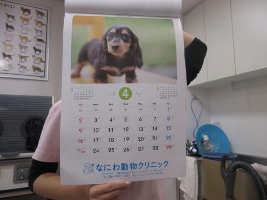 来年のカレンダー_e0339146_08065930.jpg