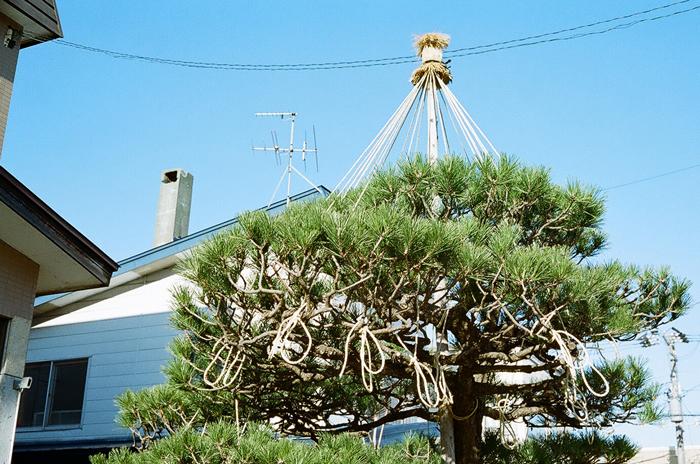 雪吊りと富山方面からの電話_c0182775_20585956.jpg
