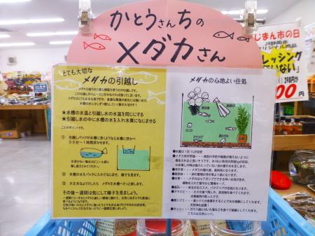 魚シリーズ  『メダカ』を飼う_b0011584_13571134.jpg