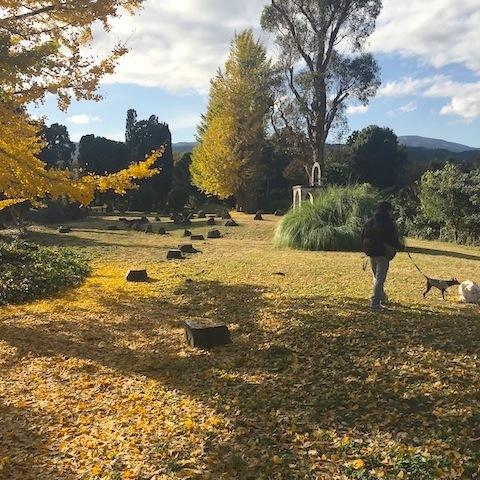 秋の終わり。_d0343297_12440926.jpeg