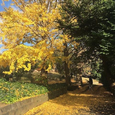 秋の終わり。_d0343297_12441047.jpeg