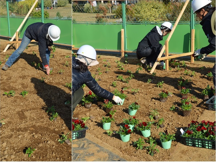 ジャクリーンガーデン よこはま 植栽施工の記録:後編_c0124100_14554678.jpg