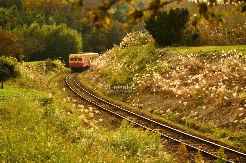 秋の遠足は小湊鉄道へ_f0321522_12034967.jpg