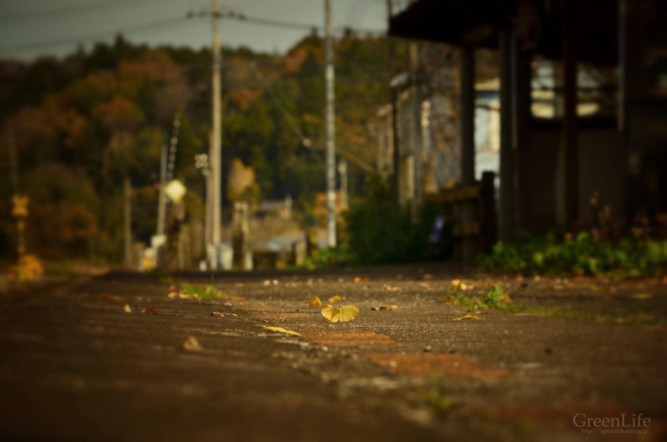 秋の遠足は小湊鉄道へ_f0321522_12104116.jpg