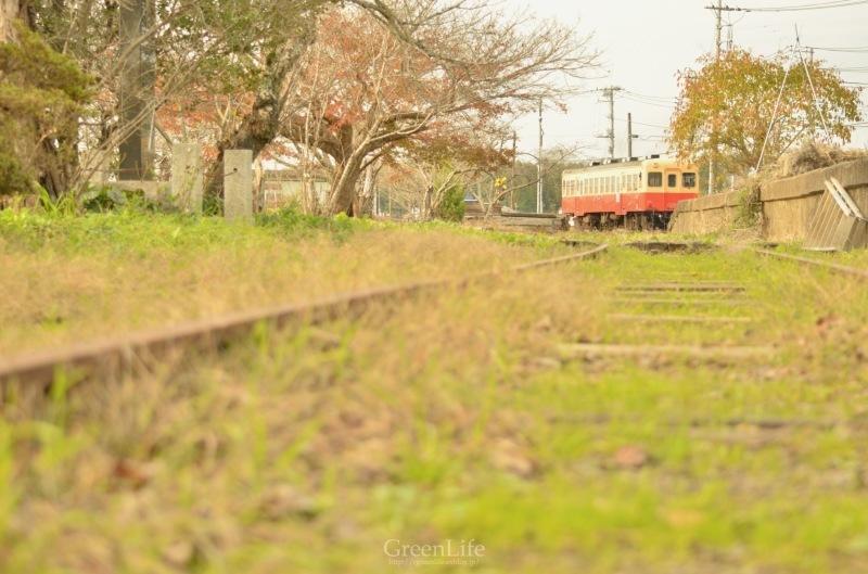 秋の遠足は小湊鉄道へ_f0321522_12203665.jpg