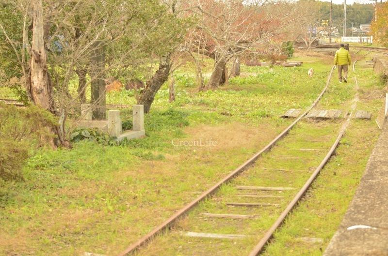 秋の遠足は小湊鉄道へ_f0321522_12222238.jpg
