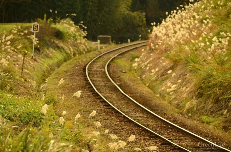 秋の遠足は小湊鉄道へ_f0321522_12252681.jpg