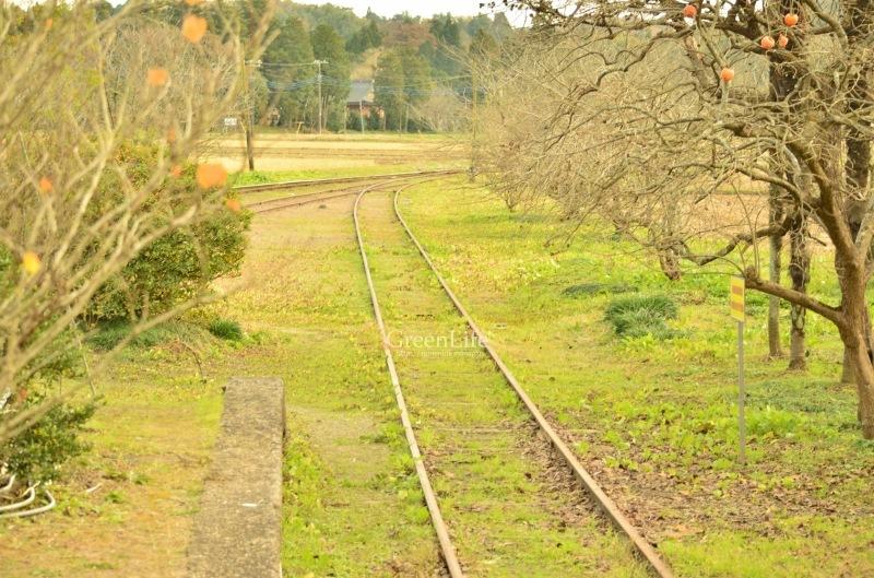 秋の遠足は小湊鉄道へ_f0321522_12381778.jpg