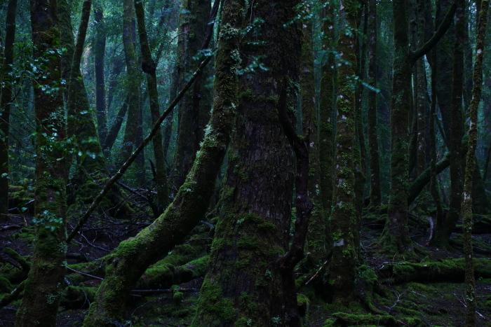 精霊の森の中で タスマニア_f0050534_09553073.jpg