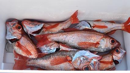 遠州灘はメジ漁の漁船がいっぱい_f0009039_15262721.jpg
