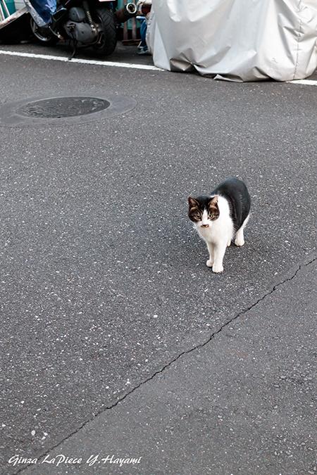 猫のいる風景 近所の子_b0133053_23411157.jpg
