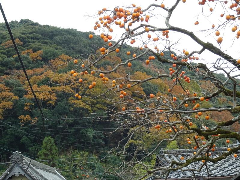クヌギ谷山道作り第3日目・・・孝子の森  by  (TATE-misaki)_c0108460_21312121.jpg