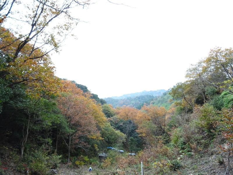 クヌギ谷山道作り第3日目・・・孝子の森  by  (TATE-misaki)_c0108460_21322494.jpg