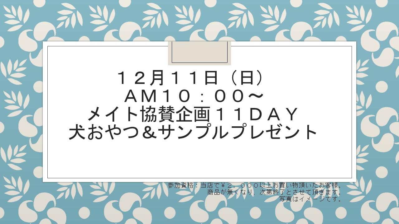 161211 わんわんDAYイベント告知_e0181866_13251622.jpg