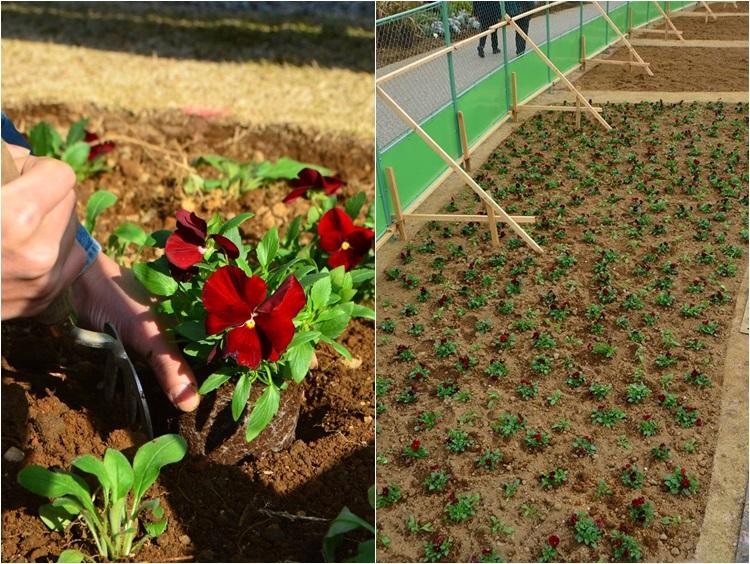 ジャクリーンガーデン よこはま 植栽施工の記録:後編_c0124100_13144951.jpg