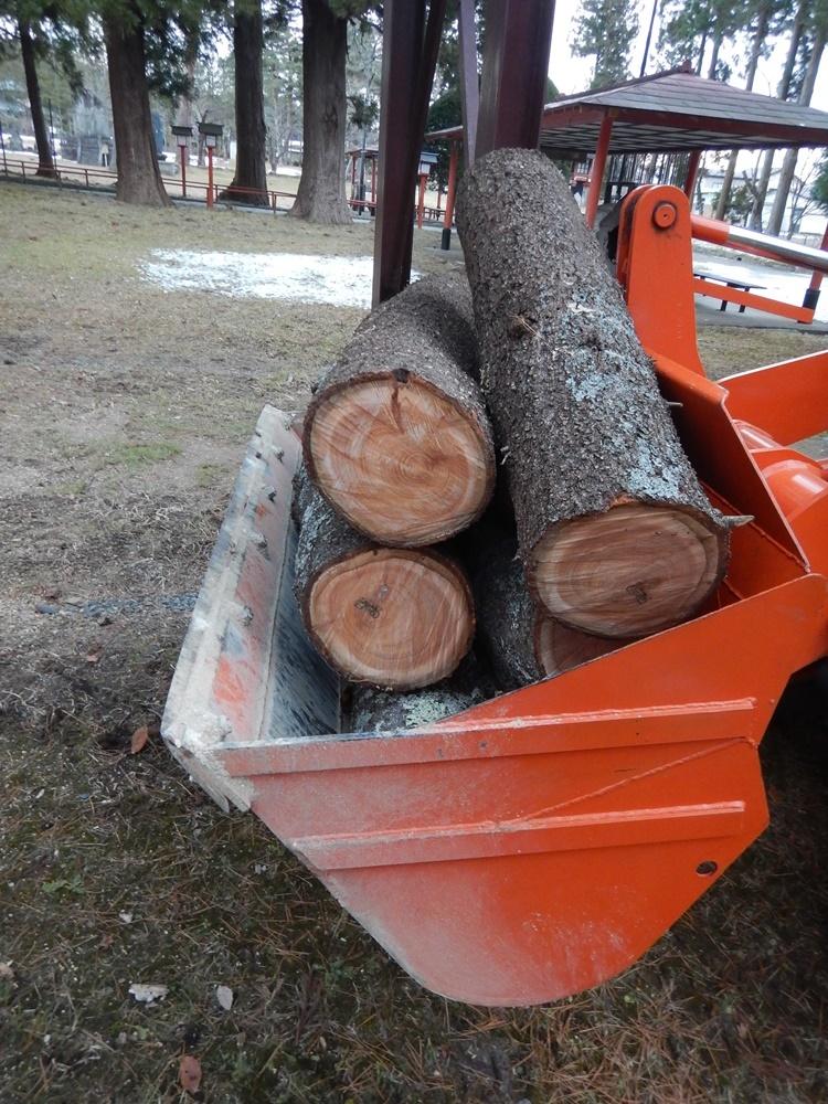 枯れ木伐採_c0111229_19591292.jpg