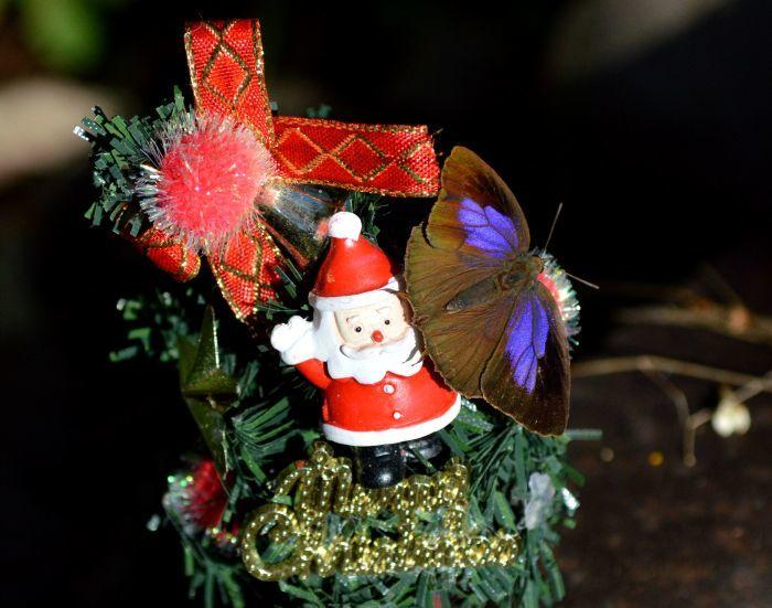 メリークリスマス_d0254540_19302367.jpg