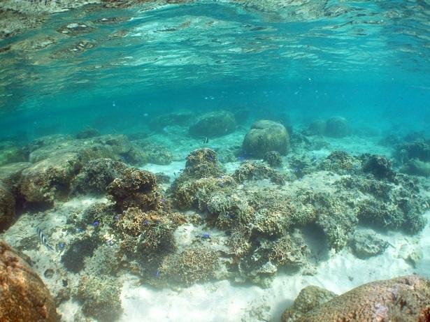 透明度抜群のビーチとクマノミいっぱいのボートポイント☆_a0156273_16582090.jpg