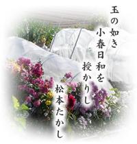 玉のごとき 小春日和を 授かりし/松本たかし_d0007589_19221632.jpg
