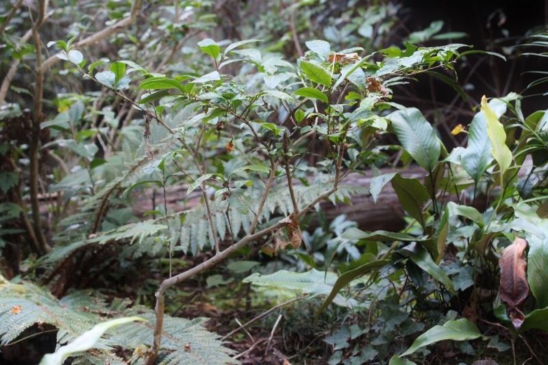 徳島で出会った茶の木_b0220318_02550014.jpg