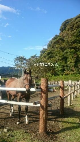 美浦の_b0187620_20374125.jpg