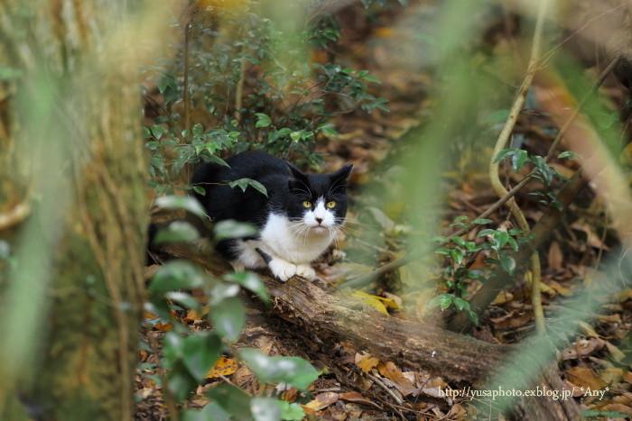 12月の外猫_e0347431_23520503.jpg