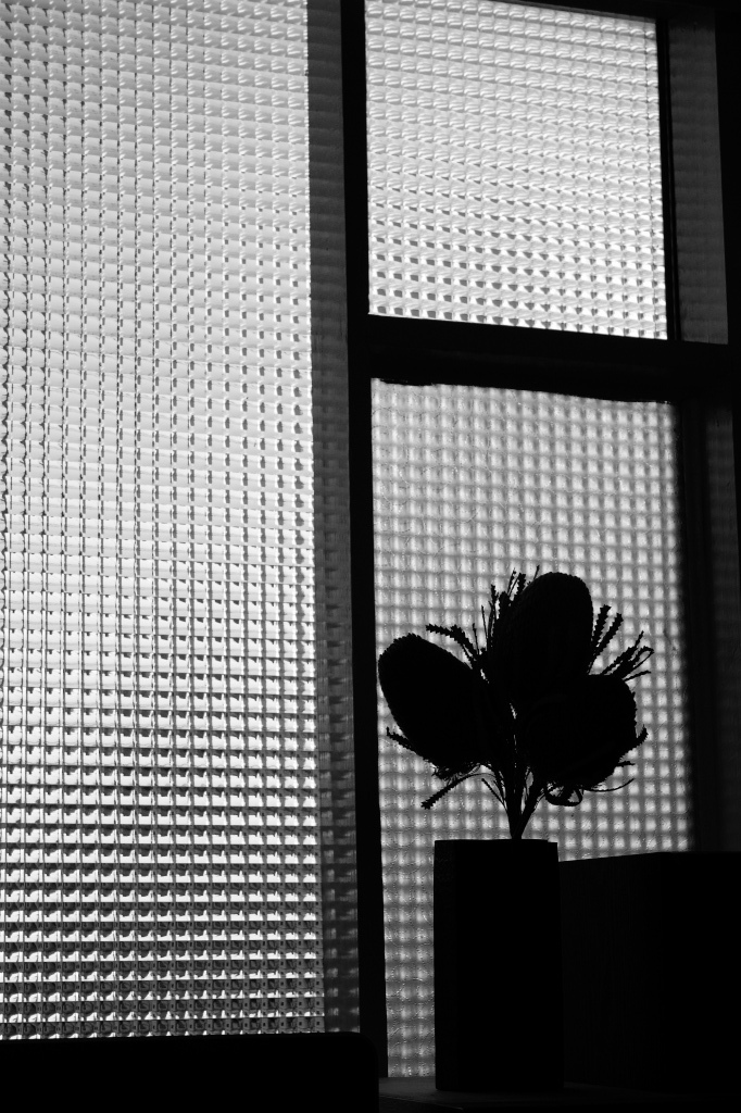 Afternoon by FUJIFILM  X-T2+carl Zeiss Touit50mm_f0050534_17191917.jpg